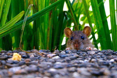 #HISTORIAS DE ANIMALES:  UNA VISITA INESPERADA